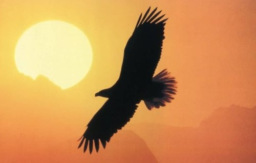 Aquila in volo